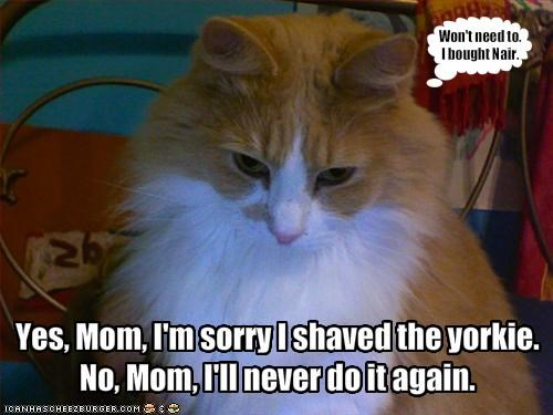 Yes, Mom, I'm sorry I shaved the yorkie.