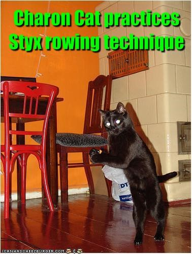 Charon Cat practices Styx rowing technique