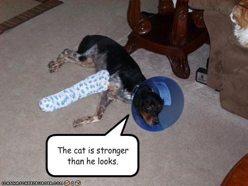 The cat is stronger than he looks.
