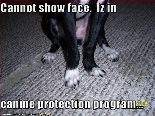 Cannot show face.  Iz in  canine protection program...