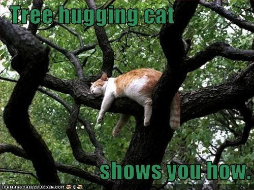 green cat hugging napping in tree