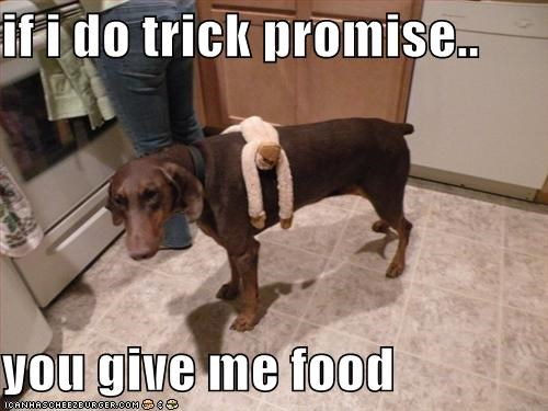if i do trick promise..   you give me food