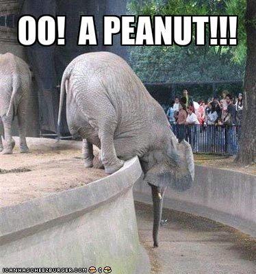 OO!  A PEANUT!!!