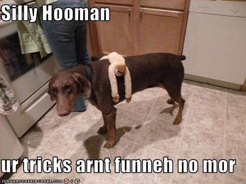 Silly Hooman  ur tricks arnt funneh no mor