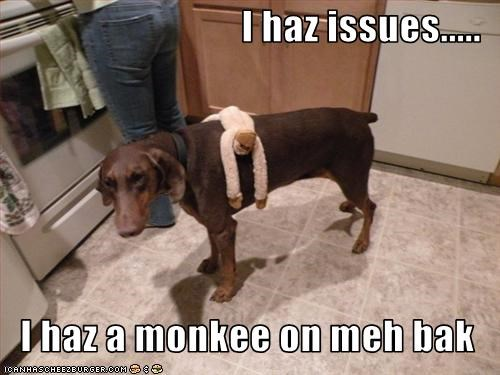 I haz issues.....  I haz a monkee on meh bak