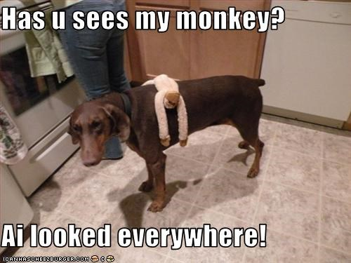 Has u sees my monkey?  Ai looked everywhere!