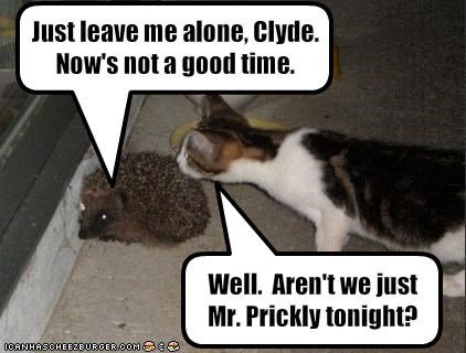 Just leave me alone, Clyde.  Now's not a good time.