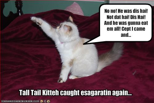 Tall Tail Kitteh caught esagaratin again...