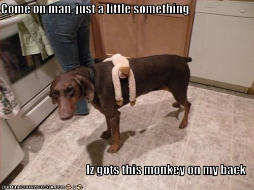 Come on man, just a little something  Iz gots this monkey on my back