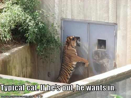 Typical cat. If he's out, he wants in.