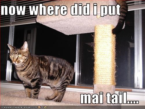 now where did i put  mai tail....