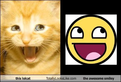 emoticons,Hall of Fame,lolcats,smileys