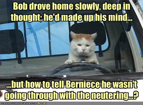 Bob drove home slowly, deep in thought; he'd made up his mind...