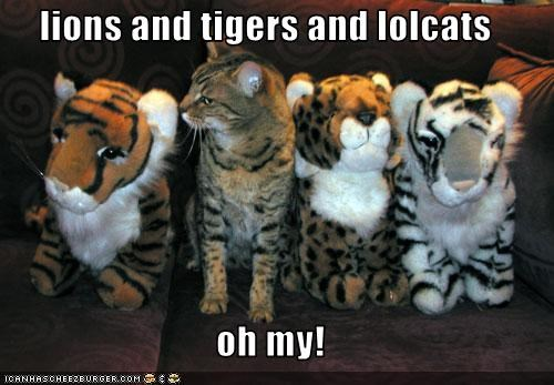 lions and tigers and lolcats  oh my!
