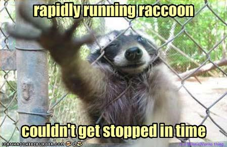 rapidly running raccoon