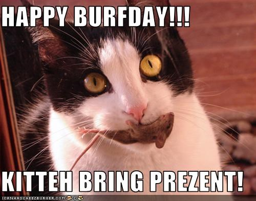 HAPPY BURFDAY!!!  KITTEH BRING PREZENT!