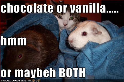 chocolate or vanilla..... hmm or maybeh BOTH