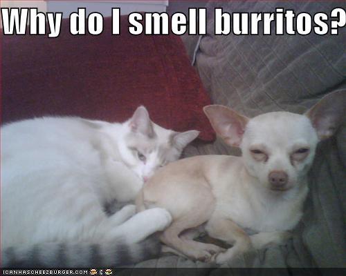 Why do I smell burritos?