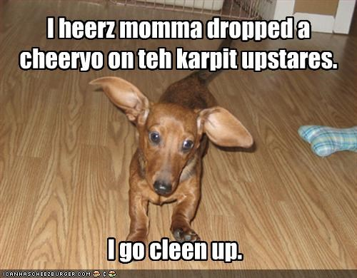 I heerz momma dropped a cheeryo on teh karpit upstares.