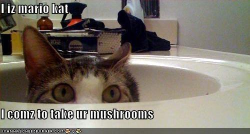 I iz mario kat  I comz to take ur mushrooms