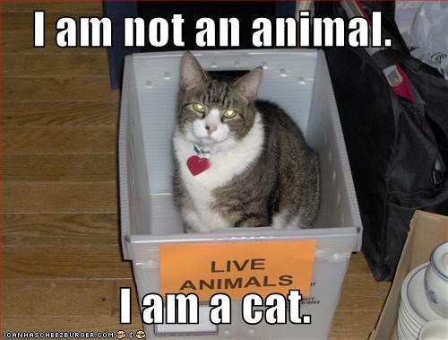 I am not an animal.  I am a cat.
