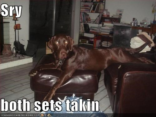 babysitting,chair,chocolate,labrador,occupied,seats,sit,sitting