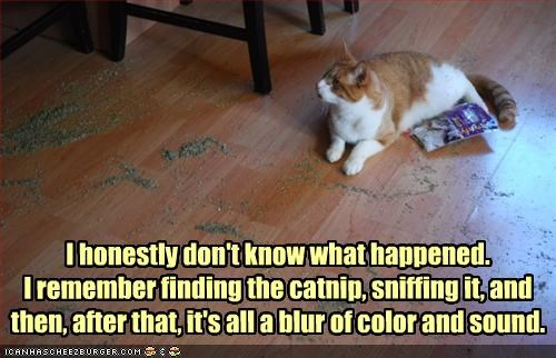 I honestly don't know what happened. I remember finding the catnip, sniffing it, and then, after that, it's all a blur of color and sound.
