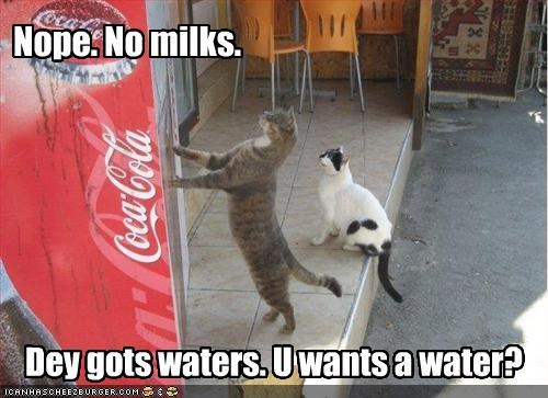 Nope. No milks.