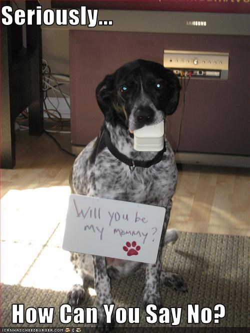Seriously...  How Can You Say No?