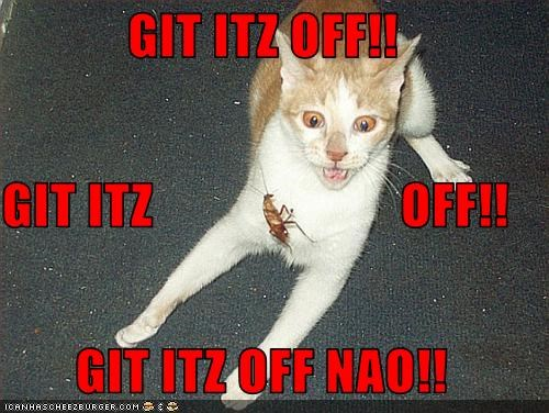 GIT ITZ OFF!!  GIT ITZ                       OFF!!  GIT ITZ OFF NAO!!