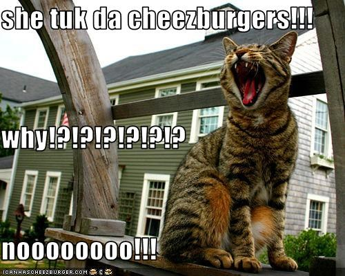 she tuk da cheezburgers!!! why!?!?!?!?!?!? noooooooo!!!