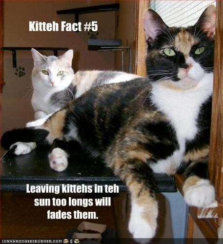 Kitteh Fact #5
