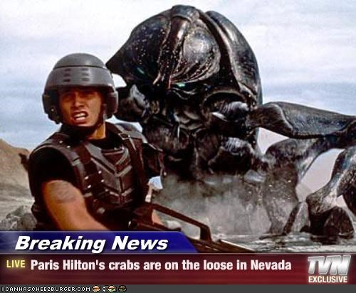 Breaking News - Paris Hilton's crabs are on the loose in Nevada