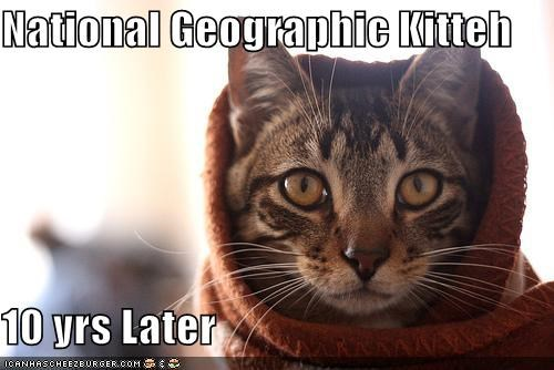 National Geographic Kitteh  10 yrs Later