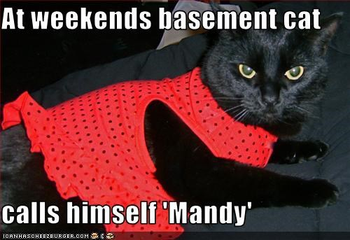 At weekends basement cat  calls himself 'Mandy'