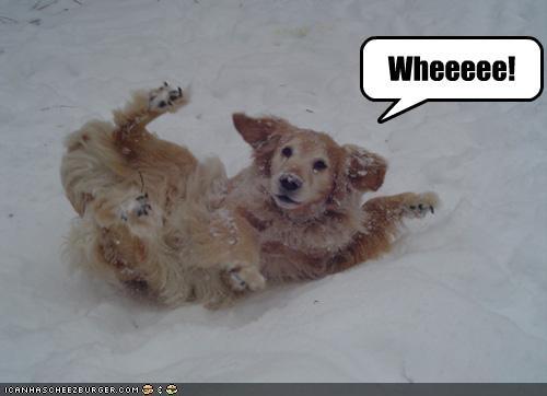 fun,golden retriever,playing,sledding,snow