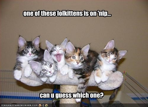 one of these lolkittens is on 'nip...