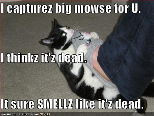 I capturez big mowse for U. I thinkz it'z dead. It sure SMELLZ like it'z dead.
