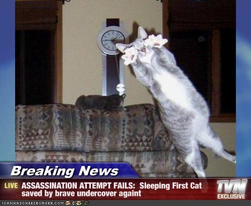 Breaking News - ASSASSINATION ATTEMPT FAILS:  Sleeping First Cat saved by brave undercover againt
