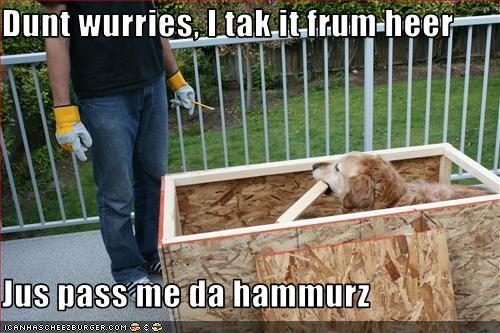 construction,do it yourself,golden retriever,hammer,wood