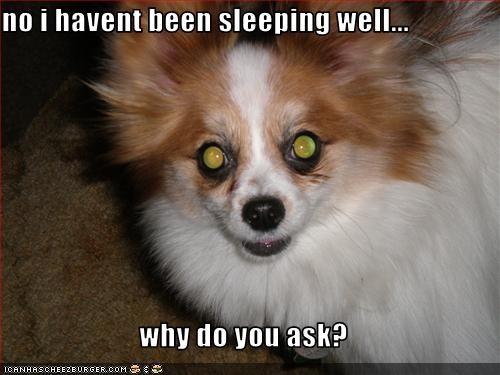 awake,coffee,papillon,sleeping,tired