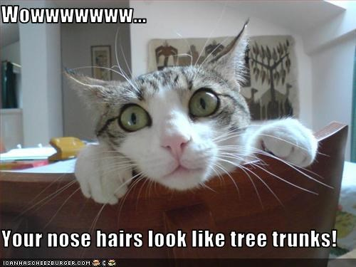 Wowwwwwww...  Your nose hairs look like tree trunks!