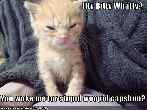 Itty Bitty Whatty?  You woke me for stupid woopid capshun?