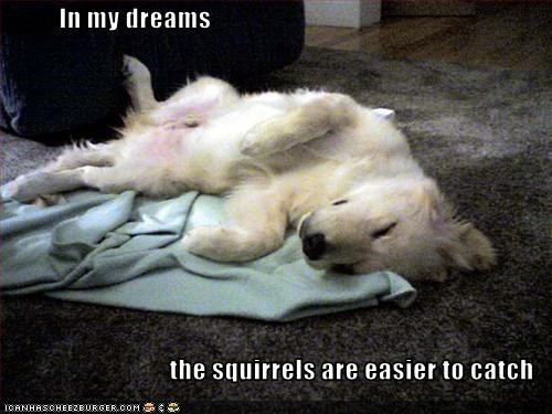 In my dreams  the squirrels are easier to catch