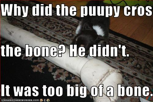 Why did the puupy cross  the bone? He didn't. It was too big of a bone.