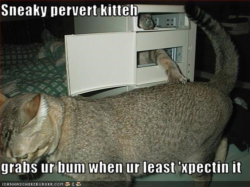 Sneaky pervert kitteh  grabs ur bum when ur least 'xpectin it