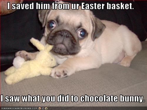 I saved him from ur Easter basket.  I saw what you did to chocolate bunny.