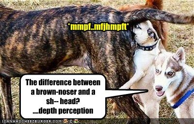 The difference between a brown-noser and a  sh-- head? ....depth perception
