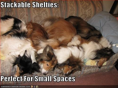 Stackable Shelties:  Perfect For Small Spaces