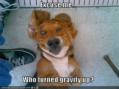 Excuse me...   Who turned gravity up?